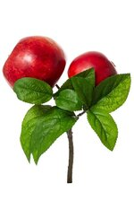 "8"" APPLE PICK RED/GREEN"