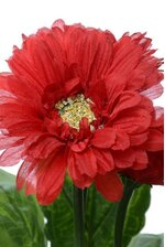 "10"" SILK GERBERA PLANT RED"