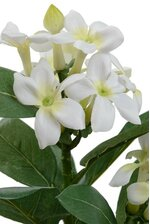 "23"" STEPHANOTIS SPRAY X2 WHITE"