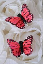 """1"""" MINI BUTTERFLY CORAL/RED PKG/12"""