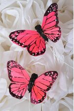 """2"""" FEATHER BUTTERFLY CORAL/RED PKG/12"""