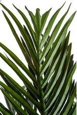 7FT PHOENIX PALM TREE GREEN