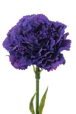 "21.5"" SILK CARNATION SPRAY PLUM"