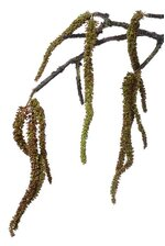 "42"" ARTIFICIAL HANGING AMARANTHUS SPRAY BROWN/ORANGE"