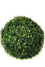 "14"" BOXWOOD BALL GREEN"