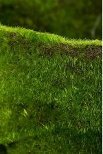 """4.75"""" X 12"""" MOSS CONTAINER GREEN"""