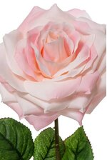 "20"" OPEN ROSE SPRAY LIGHT PINK"