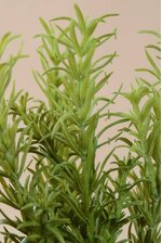 "9.5"" ROSEMARY BUSH GREEN"