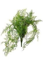 "24"" MAIDENHAIR FERN HANGING GREEN"