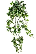"42"" HOLLAND IVY HANGING GREEN"