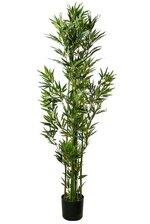 6FT MINI BAMBOO TREE IN POT GREEN