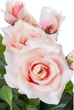 "15"" ROSE BUSH PINK/CREAM"
