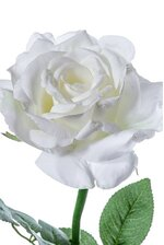 """26"""" DIANA ROSE SPRAY WHITE"""