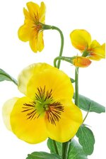 "14"" SILK PANSY SPRAY YELLOW"