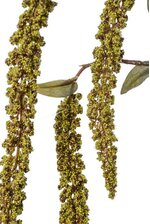 "32"" ARTIFICIAL HANGING AMARANTHUS SPRAY GREEN"