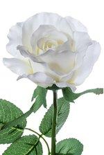 "26"" HALF OPEN ROSE CREAM/WHITE PKG/12"