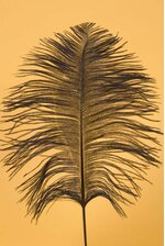 "12""-14"" OSTRICH FEATHER BLACK PKG/12"