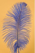 "12""-14"" OSTRICH FEATHER ROYAL BLUE PKG/12"