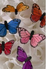"2"" FEATHER BUTTERFLY ASSORTED PKG/12"