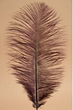 "12"" - 14"" OSTRICH FEATHER WINE PKG/12"