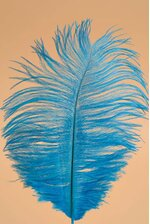"""6"""" - 10"""" OSTRICH FEATHER TURQUOISE PKG/12"""