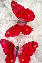 "5"" BUTTERFLY RED PKG/12"