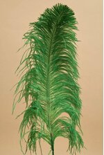 "18""- 22"" SINGLE OSTRICH FEATHER KELLY GREEN"
