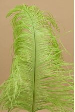 "14""-16"" SINGLE OSTRICH FEATHER LIME GREEN"