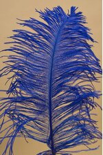 "14""-16"" OSTRICH FEATHER ROYAL BLUE PKG/12"
