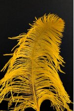 "14""-16"" SINGLE OSTRICH FEATHER GOLD"