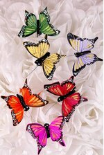 "2.5"" FEATHER BUTTERFLY ASSORTED PKG/12"