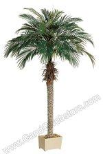 6FT PHOENIX PALM TREE GREEN