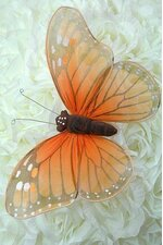 "8"" SHEAR BUTTERFLY MONARCH"