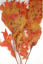 TRANSPARENT OAK LEAVES 1LB AUTUMN