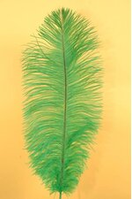 "14""-16"" OSTRICH FEATHER KELLY GREEN PKG/12"