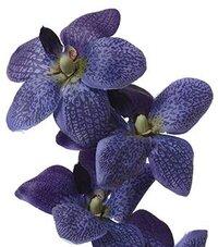 Silk Orchids - GandGwebStore.com