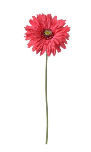 "29"" SILK GERBERA DAISY BEAUTY"