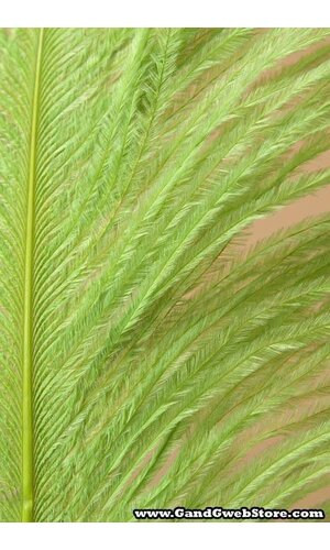 "18""-22"" OSTRICH FEATHER LIME PKG/12"