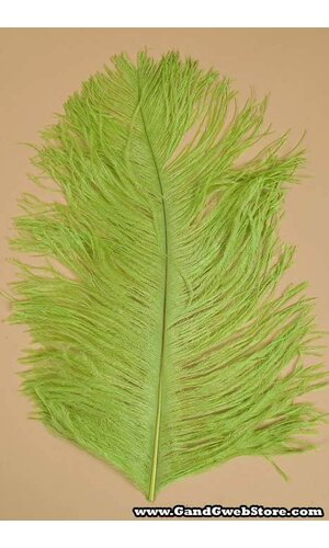 """14""""-16"""" OSTRICH FEATHER LIME PKG/12"""
