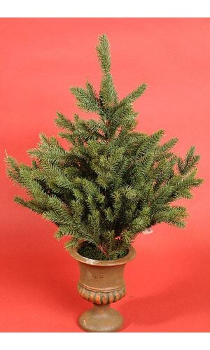 SMALL TREE IN POT