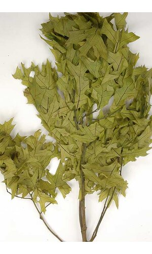 TRANSPARENT OAK LEAVES 1LB SPRING GREEN