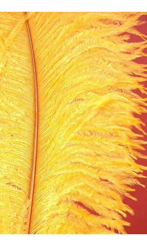 "18""-22"" OSTRICH FEATHER GOLD PKG/12"