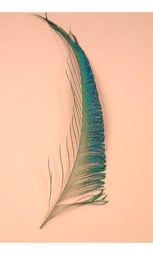 """13""""-17"""" PEACOCK FEATHER PKG/50"""